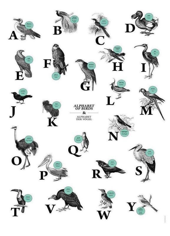 alphabet of birds, animal ABC Canvas Print