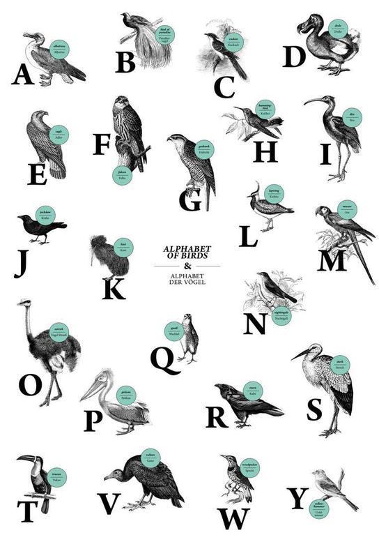 alphabet of birds, animal ABC Acrylic Print