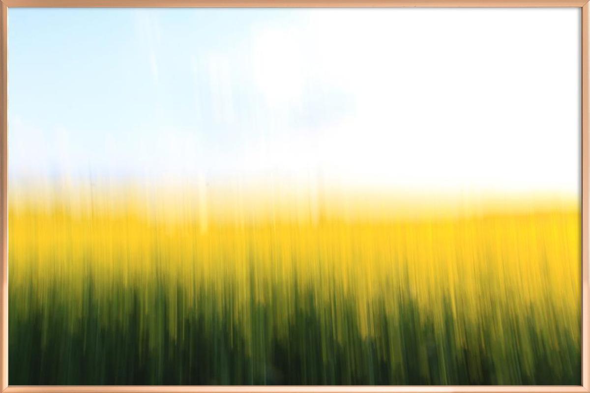 Fields Of Gold 01 Poster in Aluminium Frame