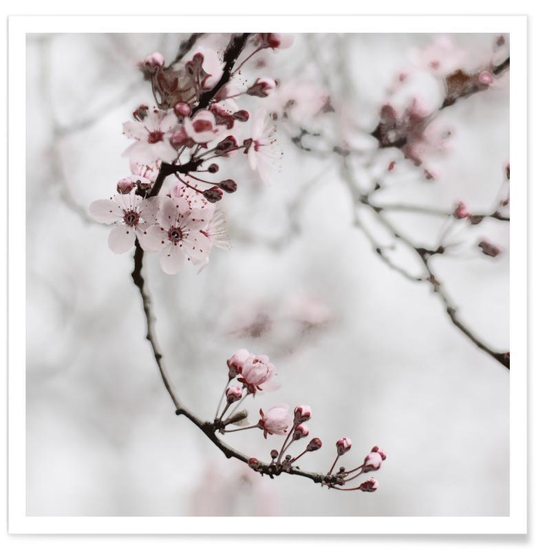 , Cherry Blossom Moments I -Poster