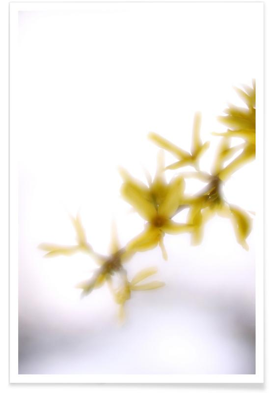 Leaves & Plants, Forsythia Poster