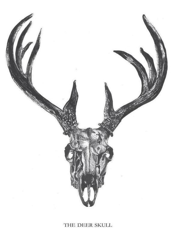 The Deer Skull Canvas Print