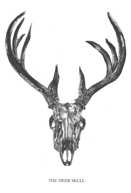 The Deer Skull Aluminium Print