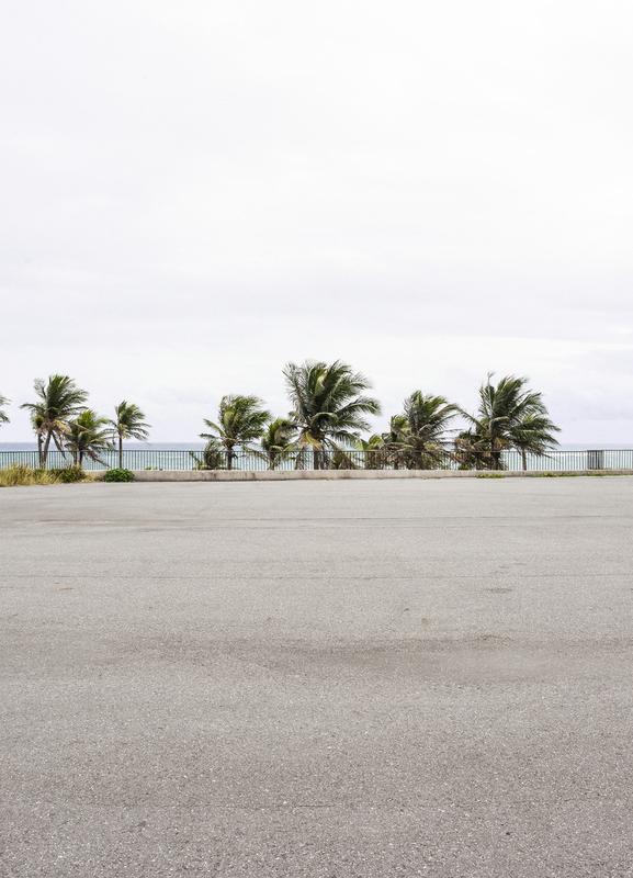 Palmen -Leinwandbild