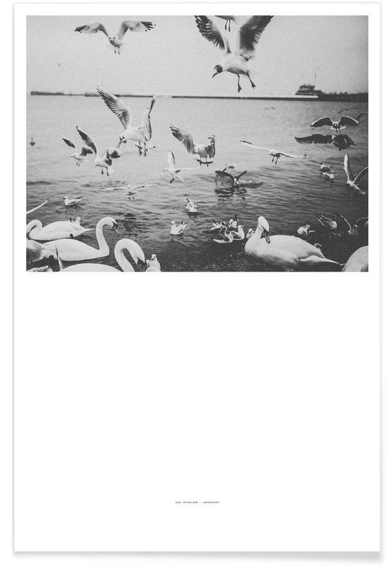 Seagulls, Swans, The Half Poster Poster