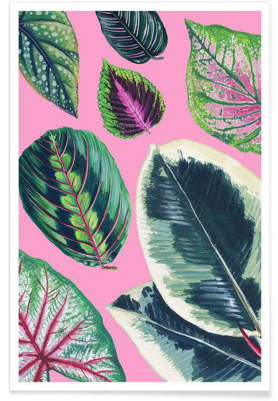 Feuilles & Plantes, Pink Mixed Houseplant affiche