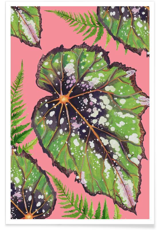 Feuilles & Plantes, Begonia Houseplant affiche