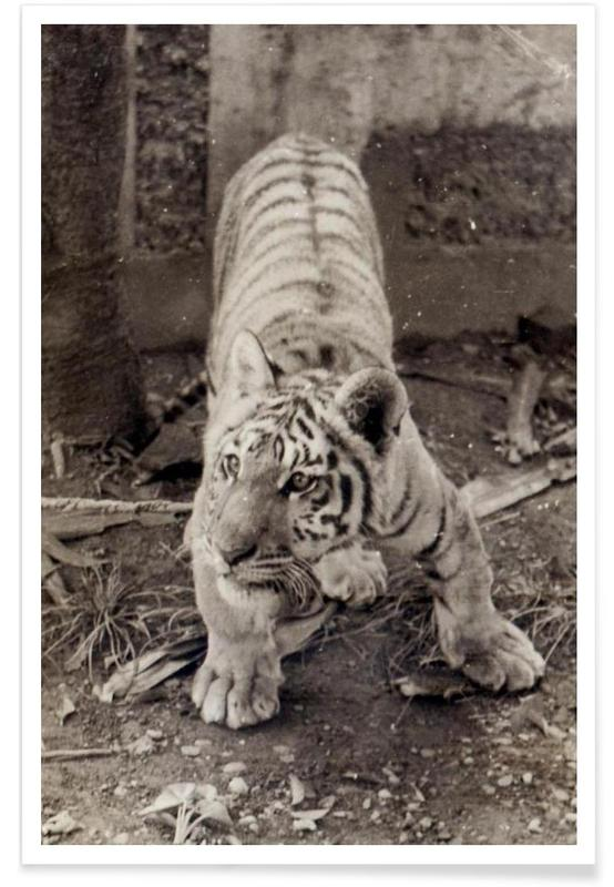 Black & White, Tigers, Aloha Poster