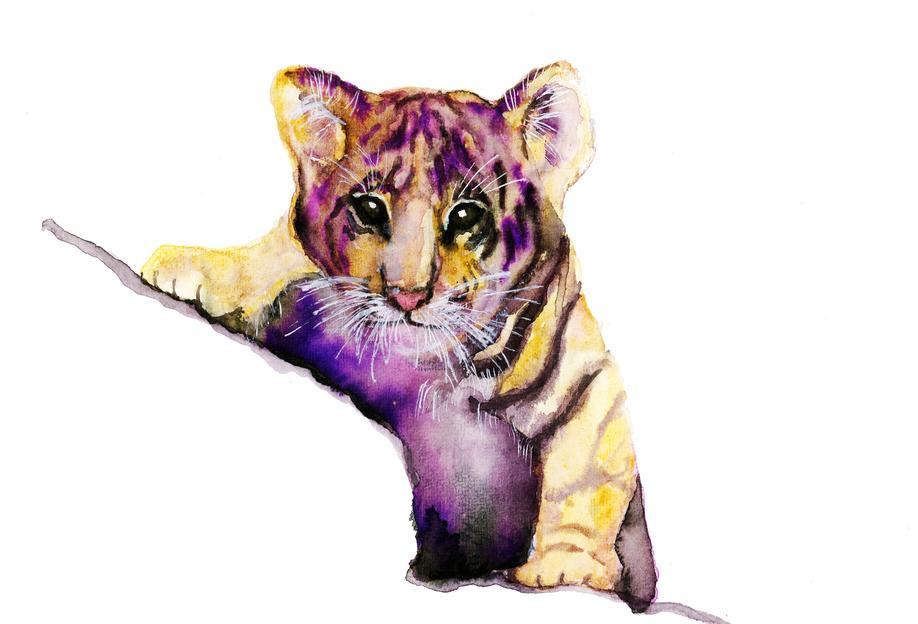 Little Tiger Aluminium Print