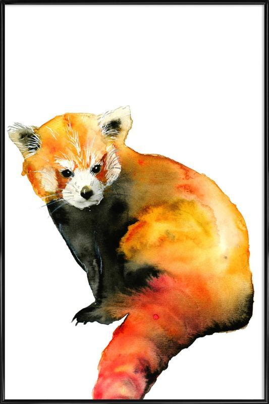 Red Panda Framed Poster