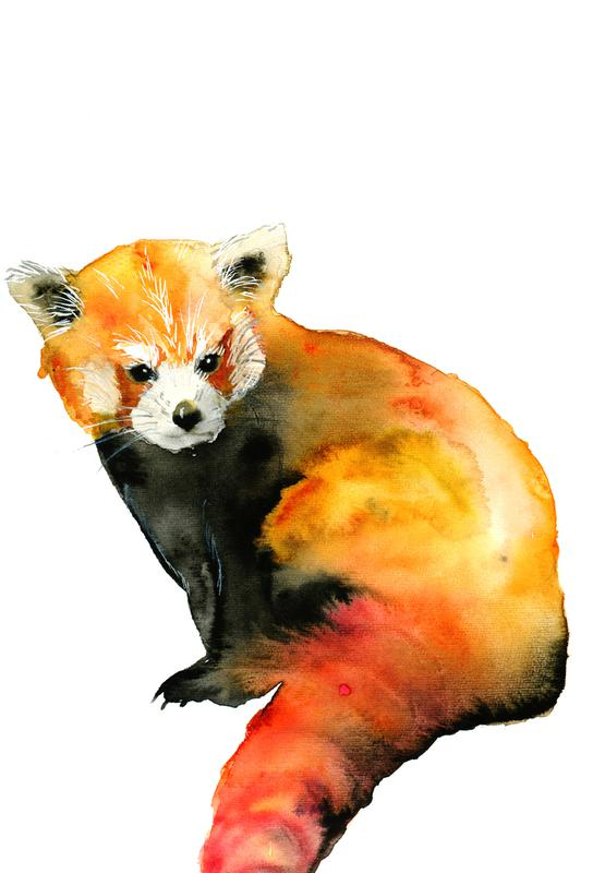 Red Panda -Alubild