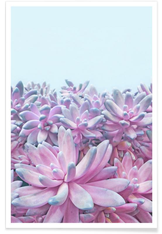 Kaktus, Sweet Succulents -Poster
