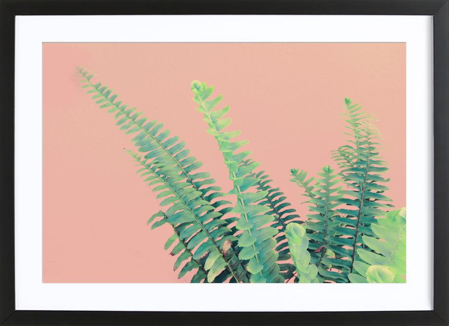 Ferns on Blush Prints ingelijste print