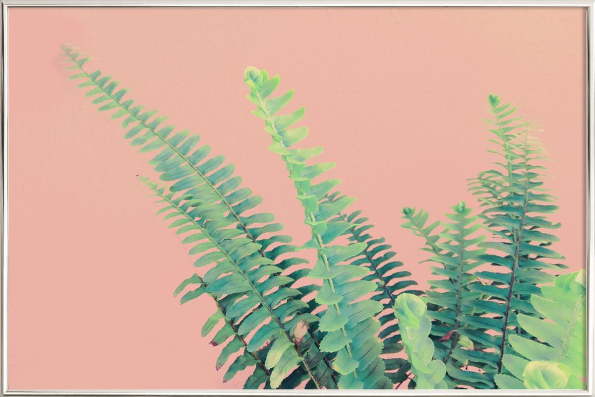 Ferns on Blush Prints affiche sous cadre en aluminium