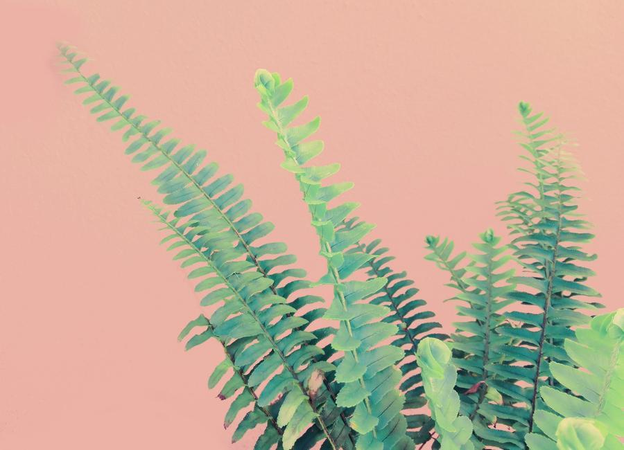 Ferns on Blush Prints canvas doek