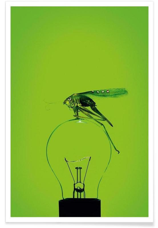 Grasshoppers, Grashüpfer Poster