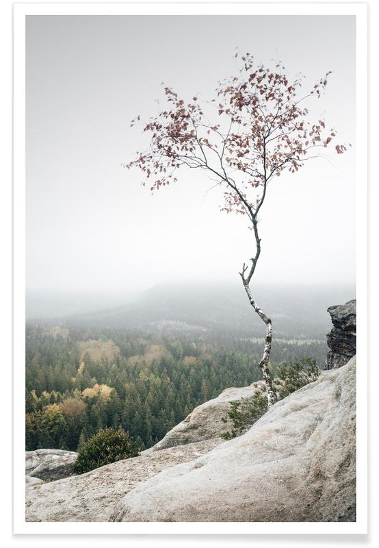 Bomen, Young Birch poster