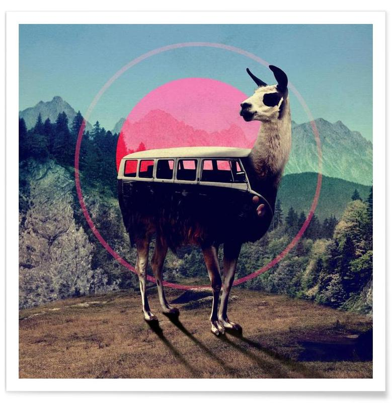 Llama -Poster