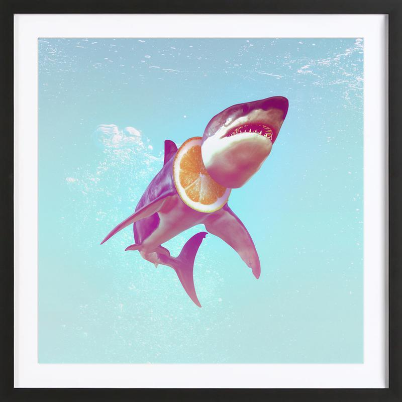 Lemon Shark Framed Print