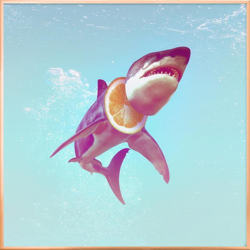 Lemon Shark poster in aluminium lijst