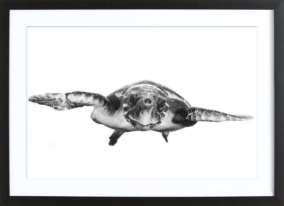 White and Turtle - Barathieu Gabriel -Bild mit Holzrahmen