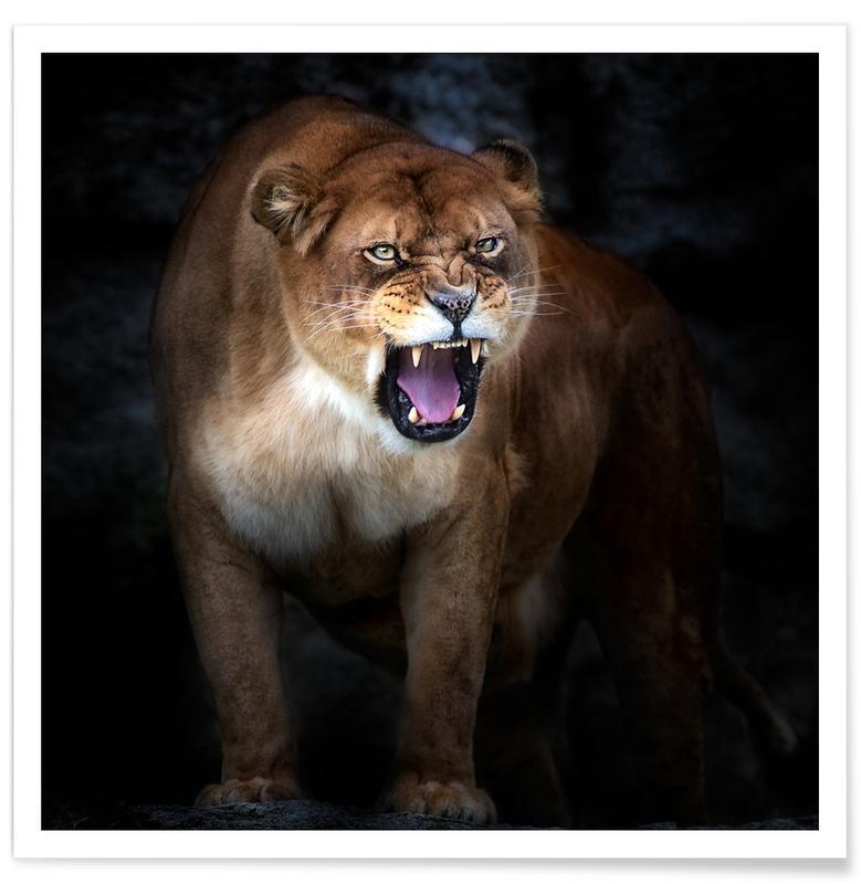 Lion Portrait -Santiago Pascual Buye Poster
