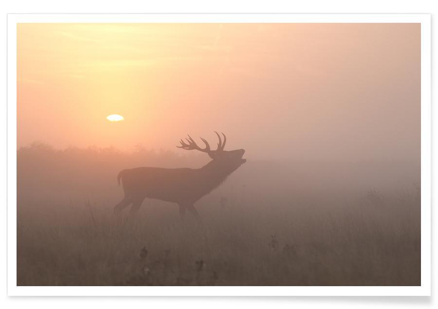 Misty Morning Stag - Greg Morgan poster