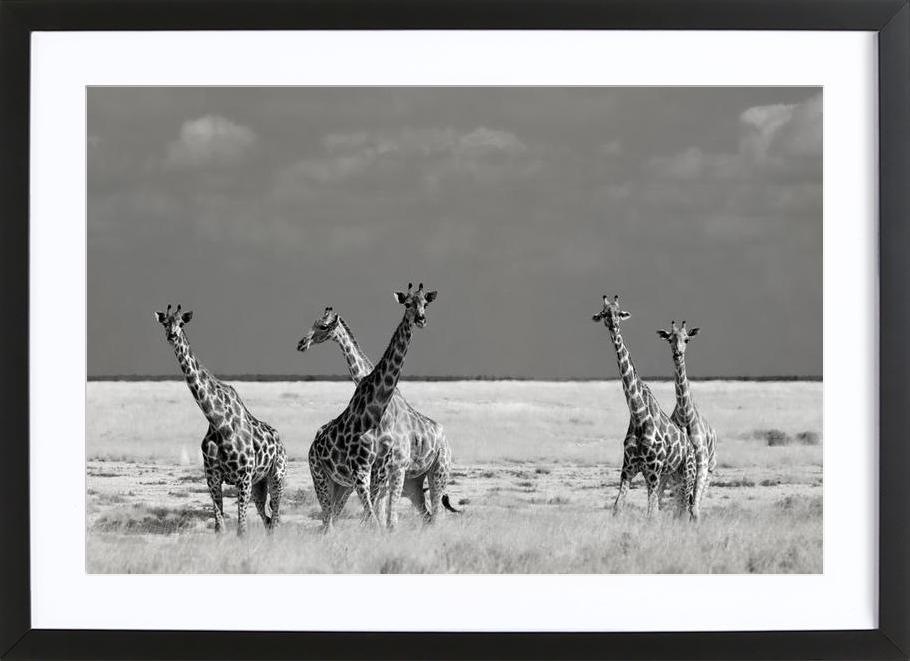 Look Girls, There Is Strange Animals - Mathilde Guillemot -Bild mit Holzrahmen