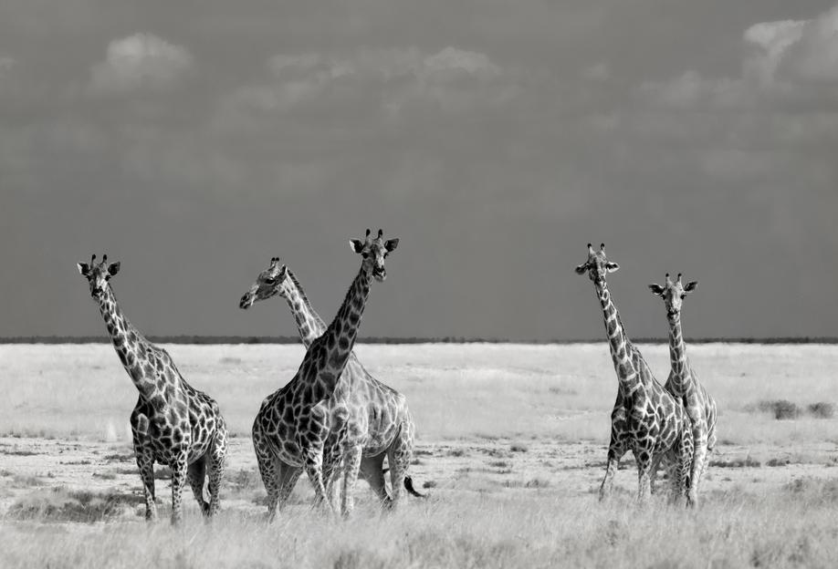Look Girls, There Is Strange Animals - Mathilde Guillemot -Acrylglasbild