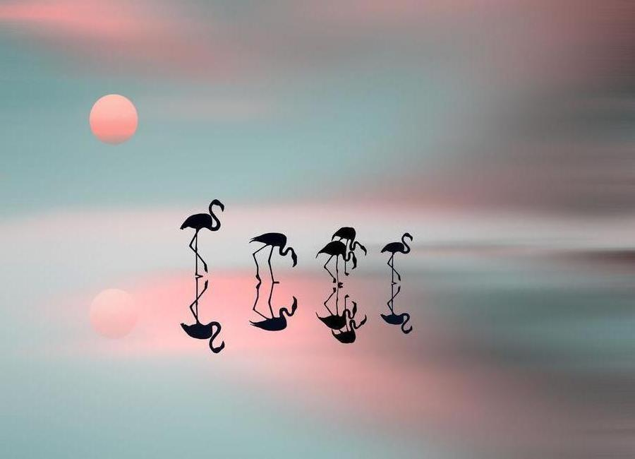 Family flamingos - Natalia Baras -Leinwandbild