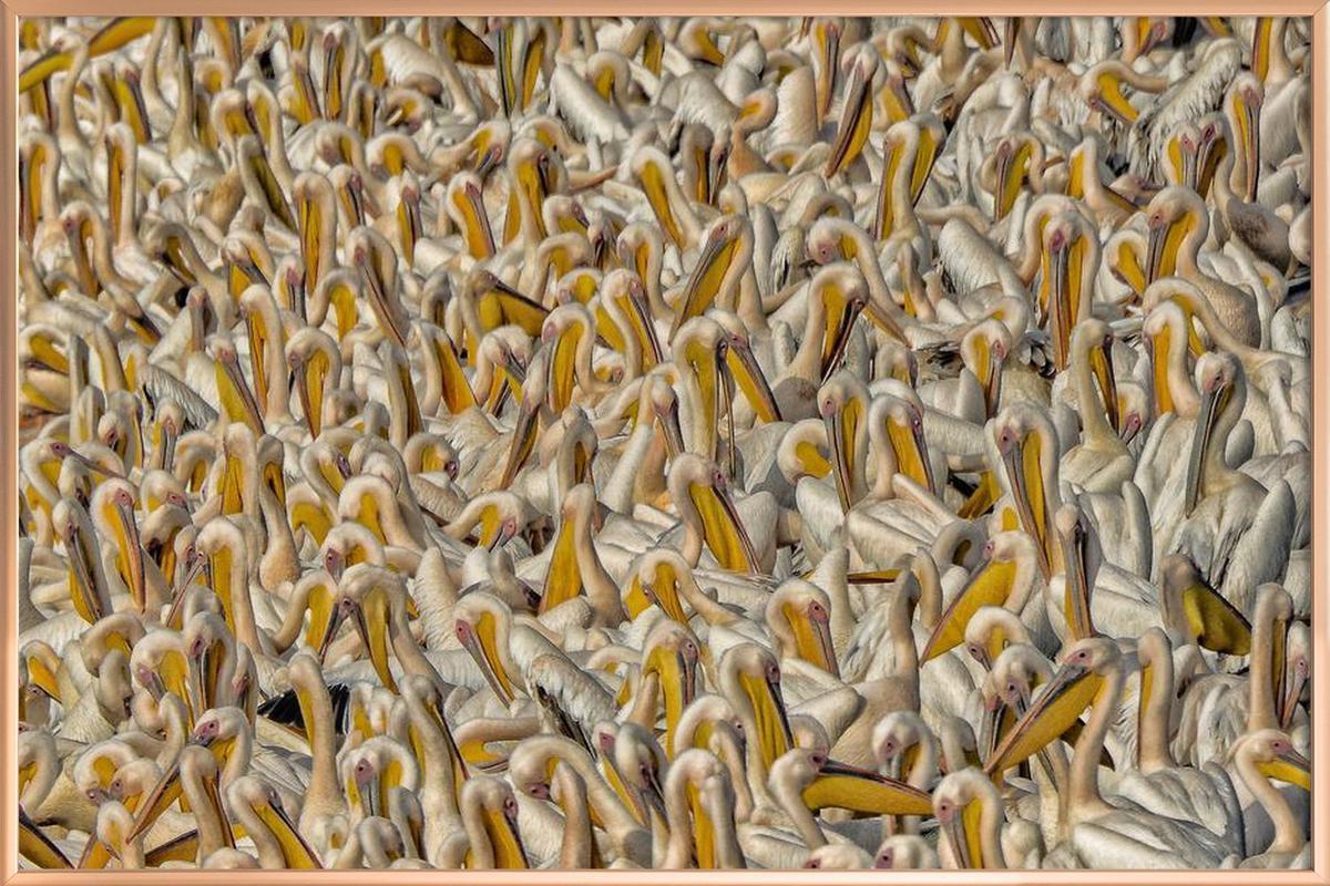 Crowded - keren or -Poster im Alurahmen