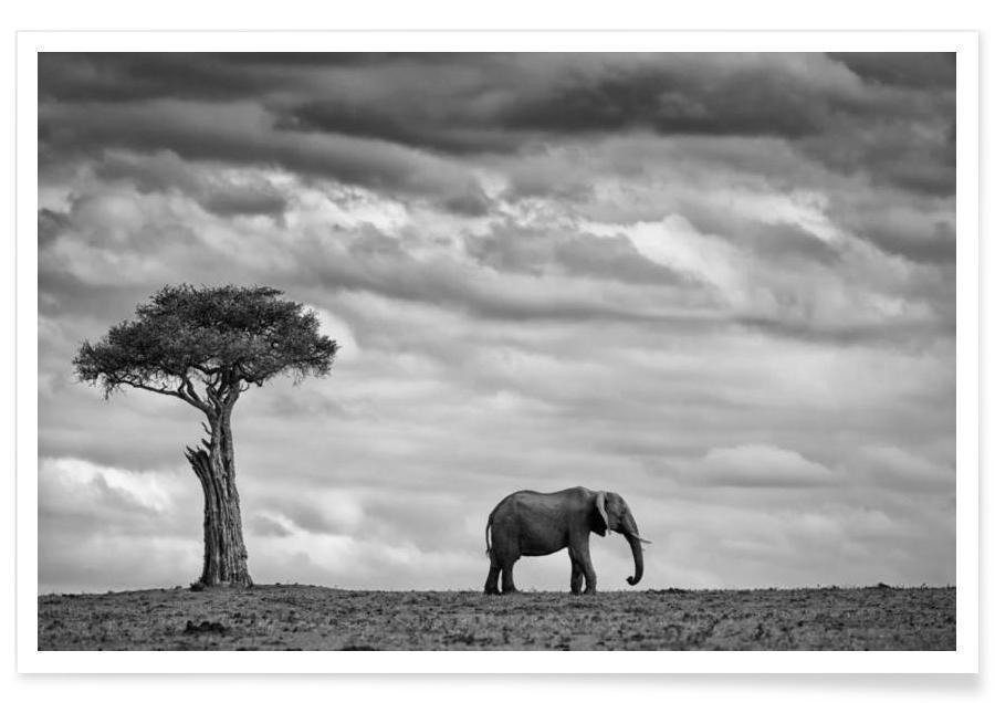 Elephant Landscape - Mario Moreno poster
