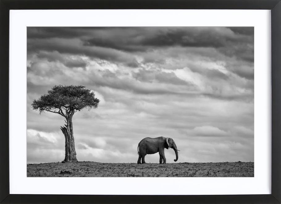 Elephant Landscape - Mario Moreno -Bild mit Holzrahmen