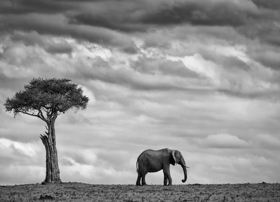 Elephant Landscape - Mario Moreno -Leinwandbild