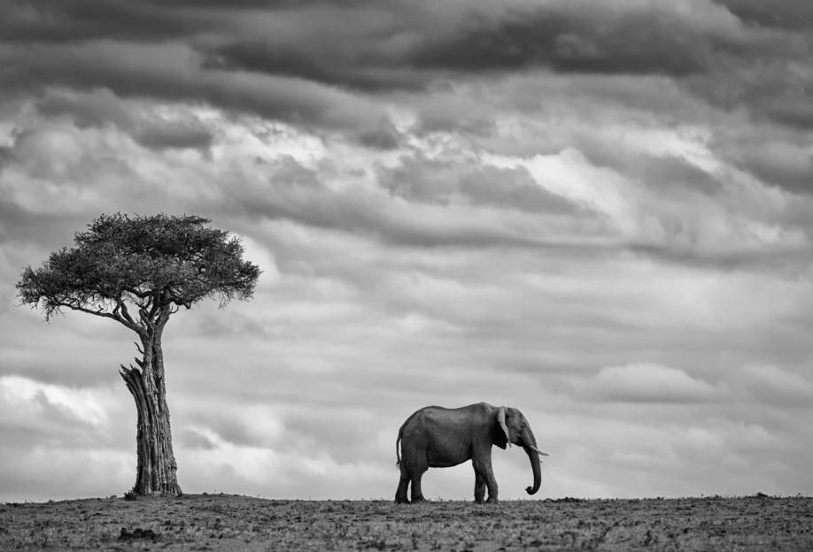 Elephant Landscape - Mario Moreno -Alubild