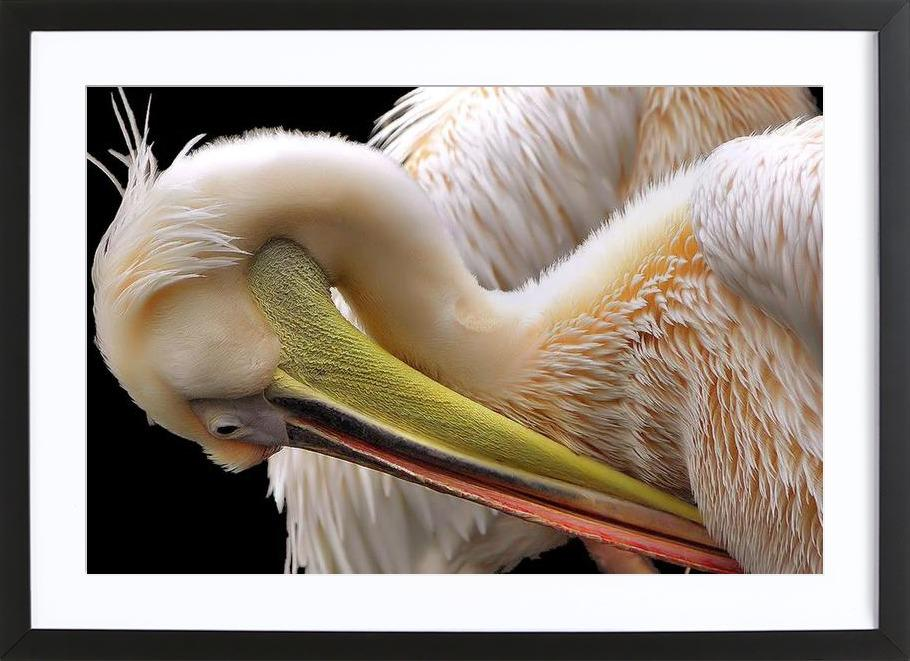 Toileting - Thierry Dufour Framed Print