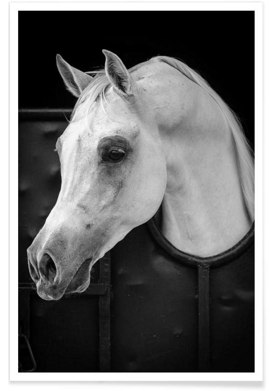 Arabian Horse - Waseem Al - Hammad affiche