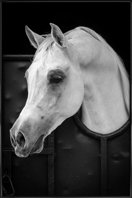 Arabian Horse - Waseem Al - Hammad affiche encadrée