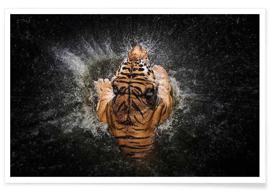Tiger Splash - Win Leslee poster