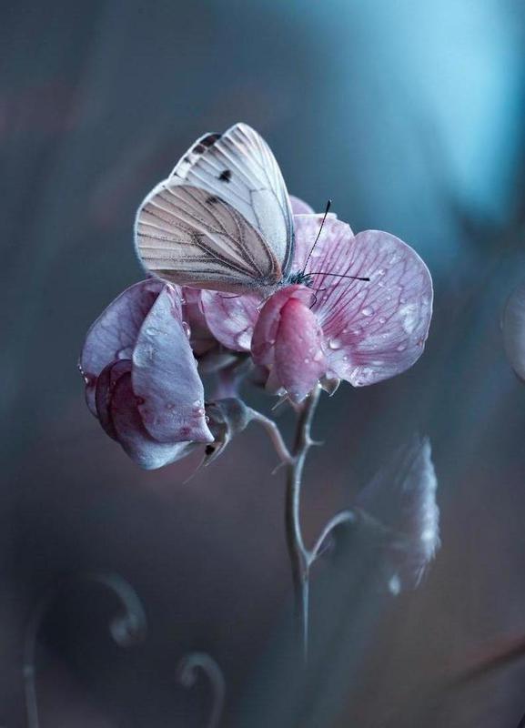 Tainted Love -Fabien Bravin -Leinwandbild