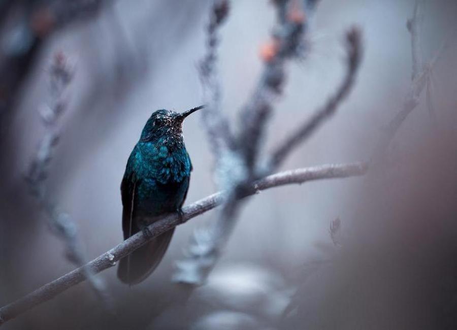 Electrical Blue - Fabien Bravin -Leinwandbild