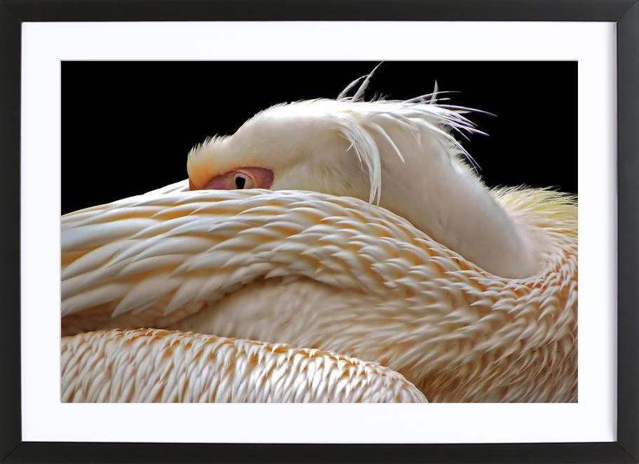 To be half asleep - Thierry Dufour -Bild mit Holzrahmen