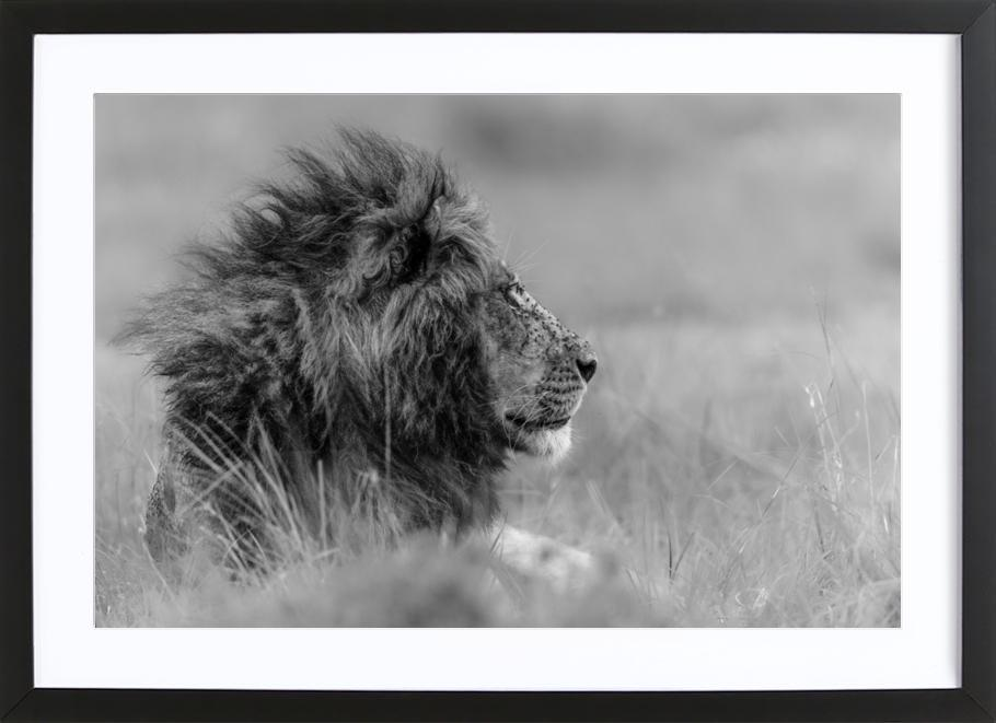 The King Is Alone - Massimo Mei -Bild mit Holzrahmen