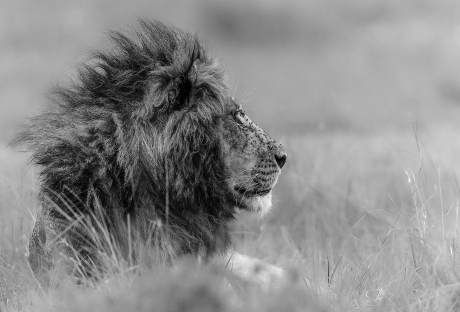 The King Is Alone - Massimo Mei -Acrylglasbild