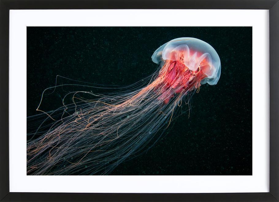 Longtail - Alexander Semenov Framed Print