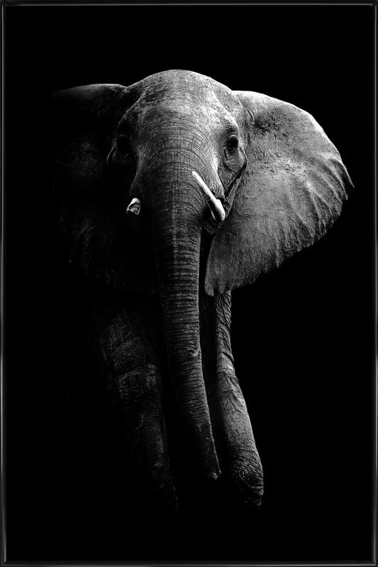 Elephant - Wild Photo Art -Bild mit Kunststoffrahmen