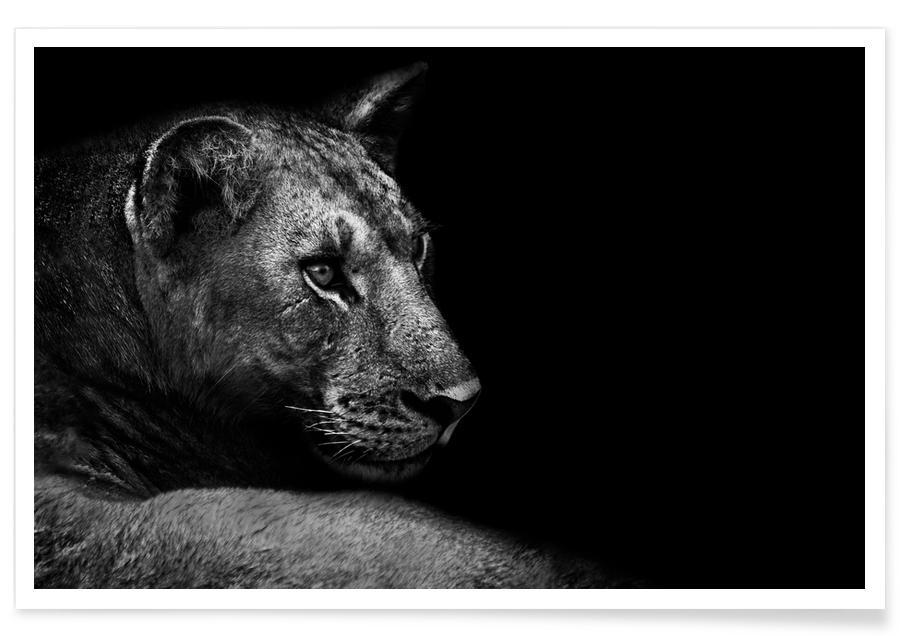 Lion - Wild Photo Art poster
