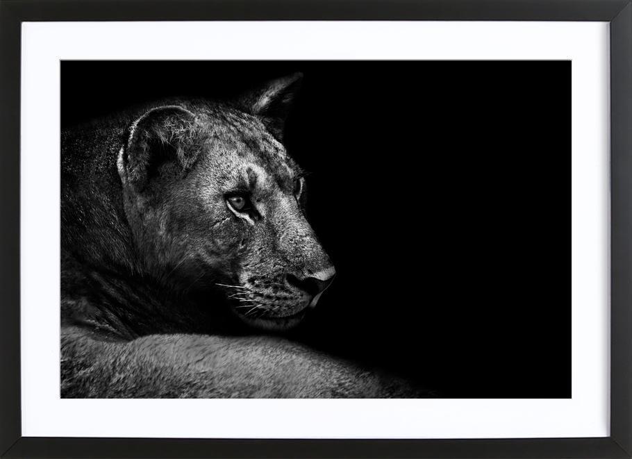 Lion - Wild Photo Art -Bild mit Holzrahmen