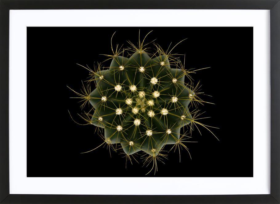 Coleocephalocereus Aureus - Victor Mozqueda Framed Print