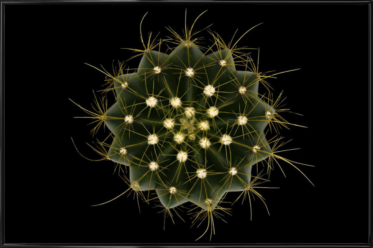 Coleocephalocereus Aureus - Victor Mozqueda -Bild mit Kunststoffrahmen